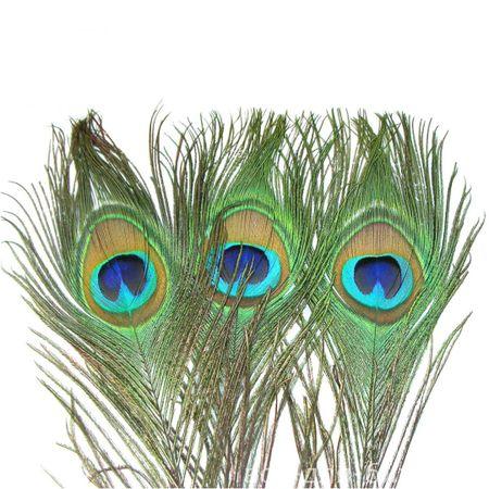 Перо павлина ( хвост )