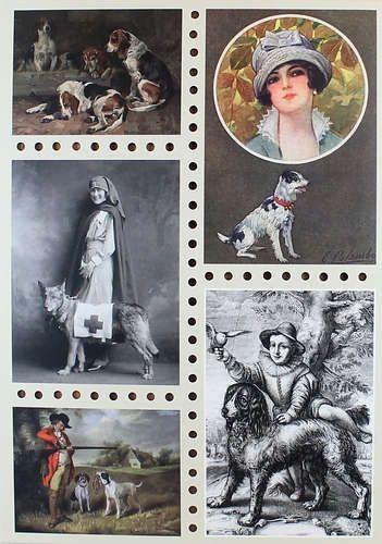 Буткова О.В., вед. ред. Собаки. Старинные открытки и иллюстрации
